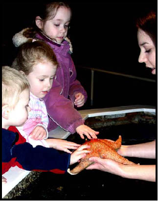 Touch Tank with a Starfish